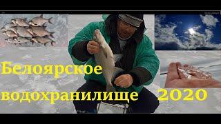 Белоярское водохранилище отчеты о рыбалке июнь 2020