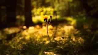 Crown of Asteria - Wildflowers
