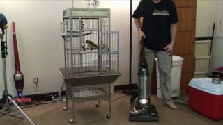 Vacuum Cleaning Near My Senegal Parrot