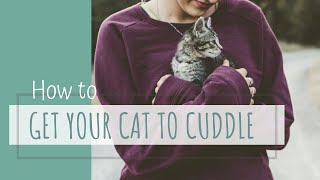 Making Cats more Cuddly, Friendly, and Affectionate - How to get your cat to love you!