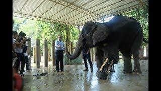Lifestyle & Youth - Hari Gajah Sedunia Di Pusat Konservasi Gajah Kebangsaan Kuala Gandah