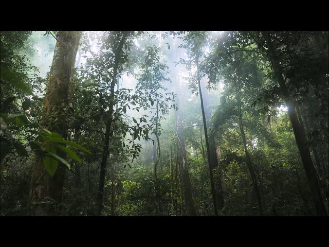 La Jungle Maudite - 2018-02-03