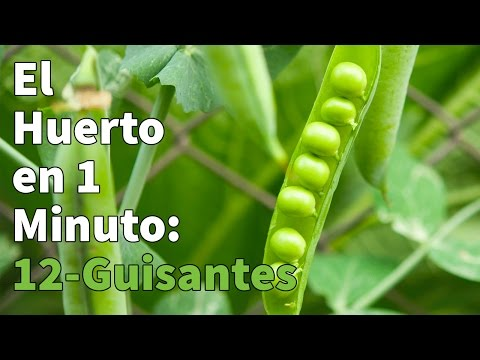 Kit huerto Guisantes Garden Pocket