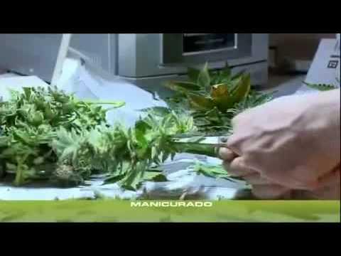 Reduksin 15 Milligramme 30 Kapseln der Preis in moskwe