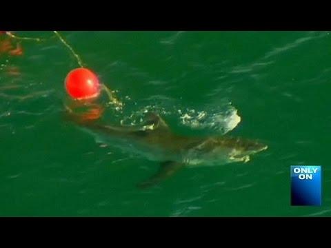 Αυστραλία: 60χρονη νεκρή από επίθεση καρχαρία