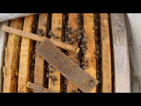 Мой итог пчеловодства за сезон на пасике