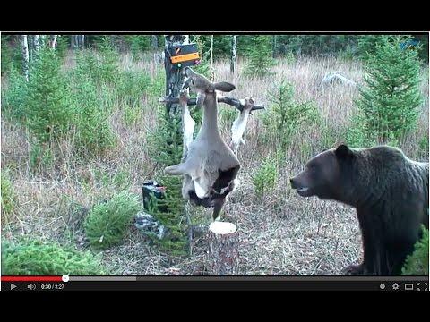 Ochrana před medvědy