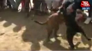 Dog Fights Comes To Haryana