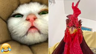 Funniest Animals 🐧 - Best Of The 2021 Funny Animal Videos 😁 - Cutest Animals Ever #2