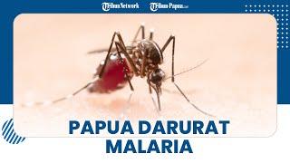 Papua Jadi Wilayah Penyumbang Malaria Tertinggi di Indonesia, Ini 3 Daerah di Peringkat Teratas