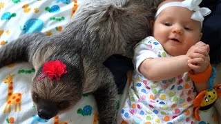 Adorable Friendship Between A Sloth And A Baby