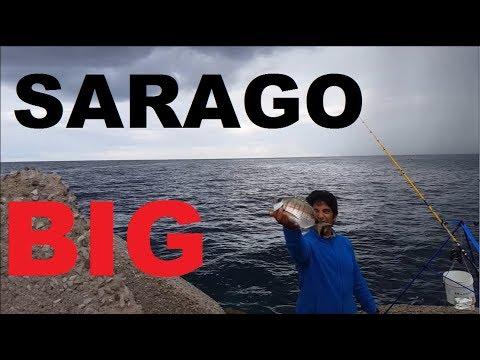 Video da pesca zimniya pesca di sport