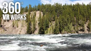 Yellowstone River Rapids - 360 VR Video