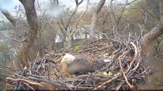 EAGLE CAM 2017- TORNADO HITS EAGLE NEST - ECC, MPDC - Washington, DC
