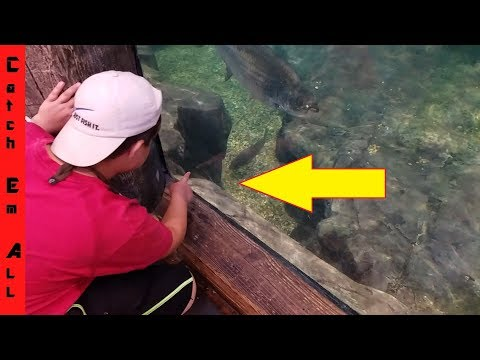BASS PRO TANK Feeding Never Before seen Fish REVEALED! Rod Give Away!