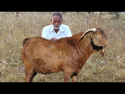 Goat Curry Recipe | Traditional Mutton Curry | Lamb Recipe By our Grandpa | Grandpa Kitchen
