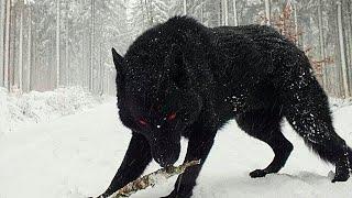 ასე გამოიყურება მსოფლიოში ყველაზე საშიში ძაღლი