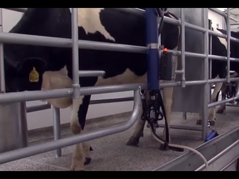 Video Proper hygenic and environmental practices in dairy farms - TvAgro by Juan Gonzalo Angel