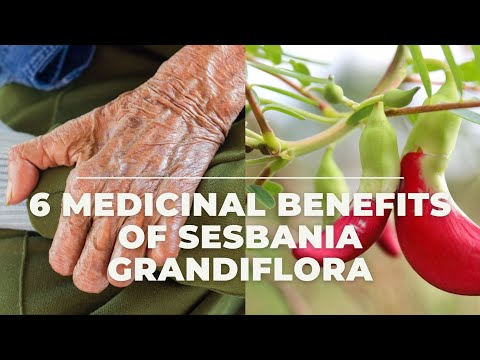 6 Effective Medicinal Benefits Of Sesbania Grandiflora #HealthNews #HealthInfo Mp3
