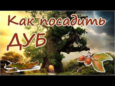 Школа киевской астрологии антарес