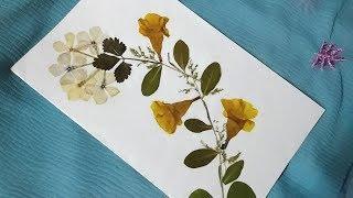 Dry Flower Art Greeting Card Making / Tutorial / DIY