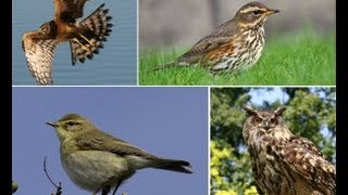En Güzel Kuş Sesleri ve Resimleri