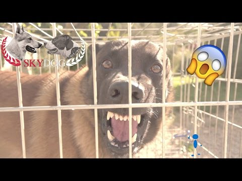 MALINOIS AGRESSIF // INAPPROCHABLE // PARTIE 1 // 1080 HD