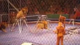 Происшествие в Казанском цирке...Лев,напал на дрессировщика.Ужас