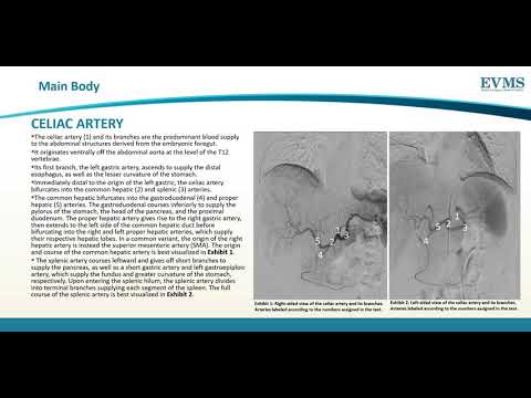 Thumbnail image of video presentation for Vascular Supply of the Abdomen on Angiography