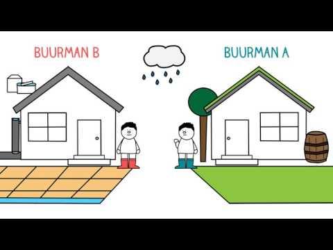 De voordelen van sedum- en moerasdaken