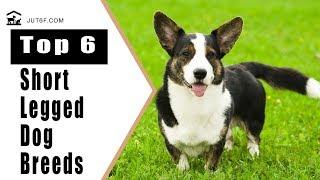 Top 6 Short Legged Dog Breeds