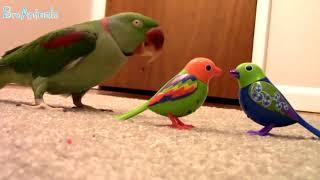 Лучшие приколы с попугаями