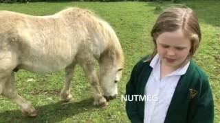 What are sessions like at Wiltshire Equine Assisted Learning?