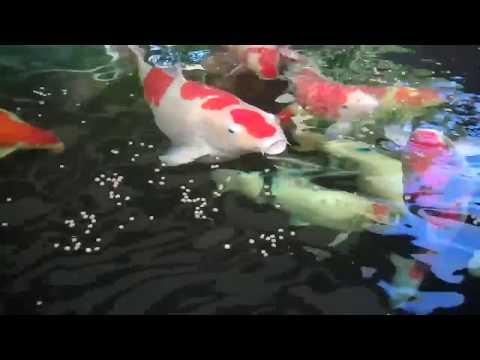 Alisin side ang pinakamahusay na mga video ng ehersisyo