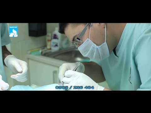 Emberi papillomavírus illóolaj
