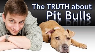 What you Need to Know about Pit Bulls