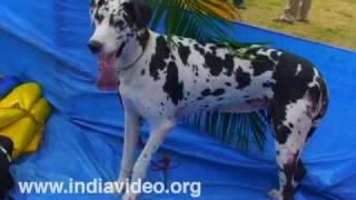 Dog Show at Palakkad, Kerala