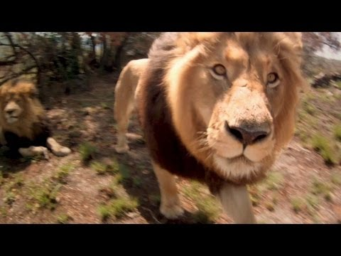 AFRICAN SAFARI 3D Bande Annonce (2014)