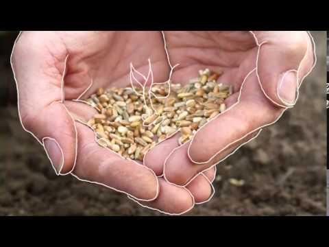 Orgulhosamente Agricultor - Renato Caetano