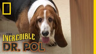 Bailey the Trash Eating Dog   The Incredible Dr. P...