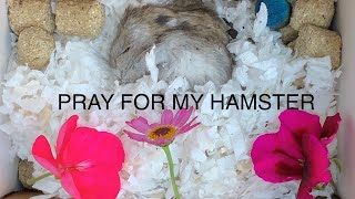 Try Not to Cry Watching This | My Pet Hamster Died