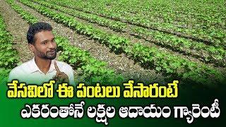 Summer Vegetables Farming techniques || Farmer Achyuth Reddy || High Profit Crops || SumanTV Rythu