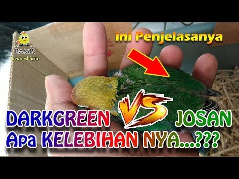 mp4 Lovebird Dark Green, download Lovebird Dark Green video klip Lovebird Dark Green