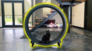 CAT TRIES EXERCISE WHEEL