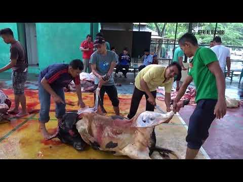 Laksanakan Kurban, Kanwil Kemenag Provinsi Aceh Sembelih 6 Ekor Sapi