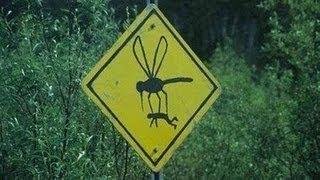 Народные рецепты от укусов насекомых.