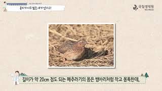 [국립생태원]03 배고픈 여우와 메추라기