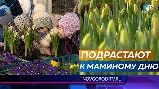 Флористы из тепличного хозяйства провели серию экскурсий для детей