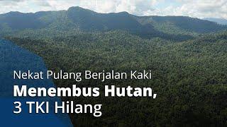 3 TKI Hilang setelah Nekat Pulang Berjalan Kaki dari Malaysia ke Indonesia Menembus Hutan Belantara