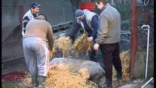 preview picture of video 'Acasă dinspre Acasă - Episod 3'